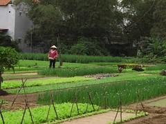 Tra Que vegetable growing village, (Duxphoto) Tags: traque clothingshop