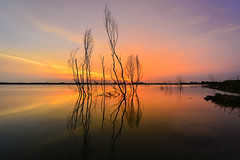 Serene (zollatiff) Tags: sunset sky lake tree water landscape twilight dusk goldenhour puchong selangor