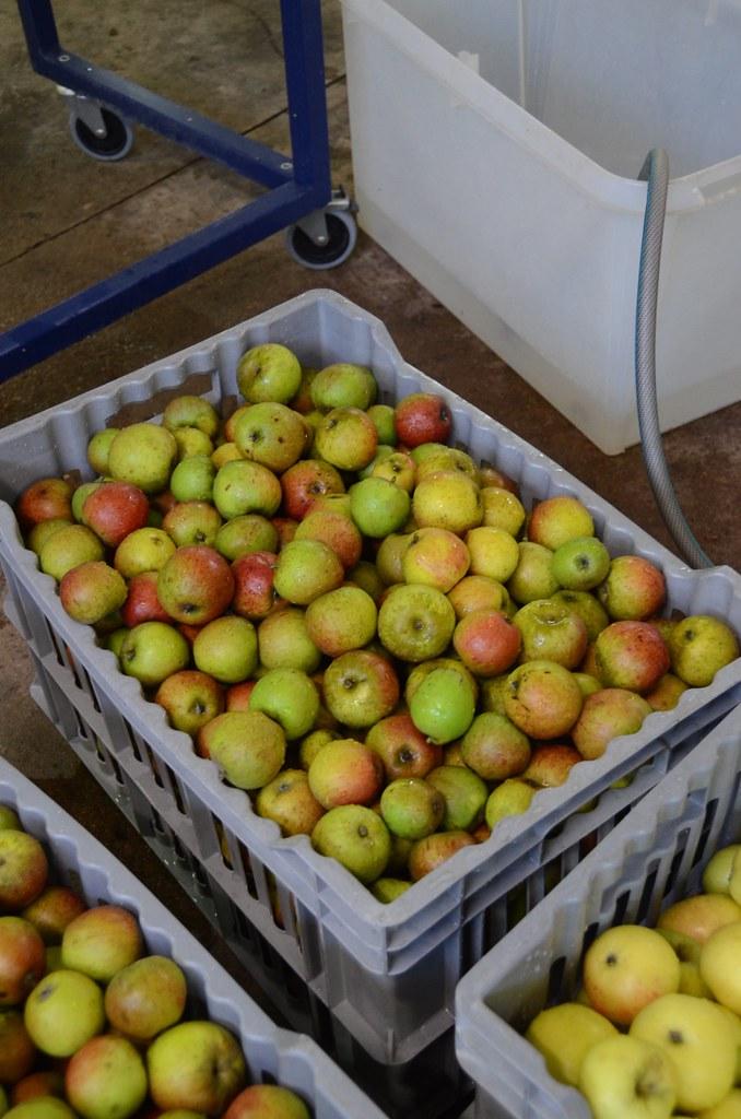 Apples of Kultur