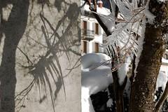 Chamonix Mont Blanc / Ice on a tree (Arnaud Bachelard) Tags: winter summer mountain snow ski france alps ice car bike les montagne alpes french skiing tour hiver cable games du dent le grandes snowboard neige olympic savoie midi blanche t chamonix mont gant blanc vtt verte haute grands 1924 valle jeux aiguille olympiques tlphrique rhnealpes tlcabine drus jorasses brvent montets flgre