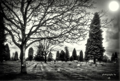 spiritworld 3 (BettieBlu) Tags: trees sky bw monochrome cemetery graveyard blackwhite scenery shadows bc burnaby bettieblu