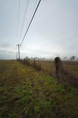 Christmas weather... (Mr. Greenjeans) Tags: canonefs1022mmf3545usm christmasweather weather fog mist roadside powerlines fence pasture landscape alonghwy61 rural louisiana mrgreenjeans gaylon gaylonkeeling