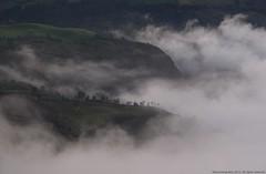 Vereda El Bosque (Ivan Mauricio Agudelo Velasquez) Tags: cloud mountain tree arbol montaa niebla nube