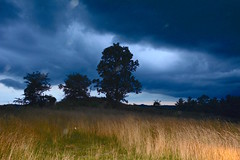 Trees with storm cloud cover (Sarah Hina) Tags: stormfront stormclouds field grasses carheadlights drama trees dark dusk
