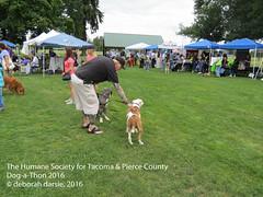 DAT2016_Crowd_1186 (greytoes_99) Tags: agility dat2015 dat2016 event humanesocietytacoma people summer tacoma tacomahs volunteers dog humananimalbond cat lakewood wa us