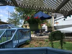 Vinca and vine (King Kong 911) Tags: vinca vine ivy dog flowers butterflies creek