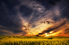 The Luminous Landscape XXVI. (Zsolt Zsigmond) Tags: sky sunset clouds rapeseed canola spring yellow