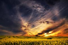 The Luminous Landscape XXVI. (Zsolt Zsigmond) Tags: sky sunset clouds rapeseed canola spring yellow