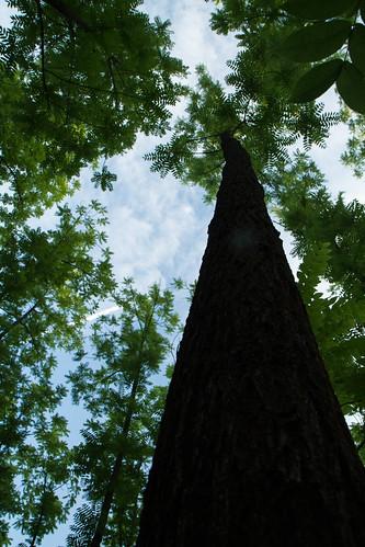 Ořešákový les
