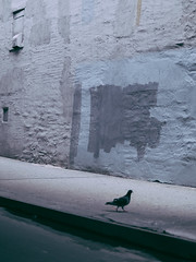 OS001657 (howardzhang100) Tags:  city olympus newyork outdoor  bird pigeons  color street