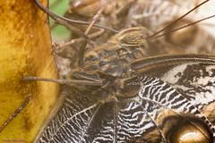 K46A8007 (Yvonne23021984) Tags: schmetterling butterfly hamm germany deutschland maxipark markro photography macrophotography canon canonphotography markofotografy canoneos7dmarkii insects insekten nature naturfotografie naturephotography closeup colorkey schmetterlinge butterflies