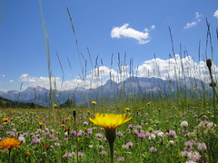 Blumenpracht im Gadertal (dietmar.schuler) Tags: gadertal tia vaciara
