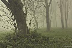 Morning fog (Tamara de Koning) Tags: morning forest bos fog fogg mist misty canon 550d alienskin tamaradekoning spaarnwoude nederland boom groen green bruin tree gras grass