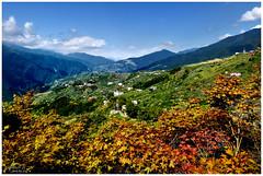 """Nook.Taiwan"""" Taichung""""... (DaviD) Tags: david  taiwan taichung travel"""