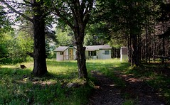 Forest dwelling (elisecavicchi) Tags: nova scotia cape breton north canada summer forest wood house dwelling structure sunlight patchy tree spruce maple drive home august heat vivid green lush driveway illuminated shadow dappled shade light diffused simple