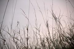 IMG_7125 (nicole.schmidtova) Tags: photography czechrepublic canon canon60d czech countryside nature simply autumn fall