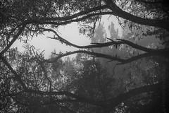 fallen tree (Florian Grundstein) Tags: tree lake mirror reflections drops nikon fx fullframe d610 nikkor upperpalatinate