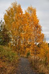 October (totheforest) Tags: autumn fall sweden path autumnleaves autumncolors stig hst lule norrbotten hstfrger hstlv nikond90 bergnset htrsket nikkorafsdx18105mmf3556gedvr