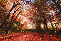 Early Autumn Morning Sunrise in Friston Forest (JamboEastbourne) Tags: park autumn england sun tree forest downs sussex south east national tones friston