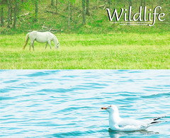 [ Wildlife ] ( SUMAYAH ) Tags: ca camera canada canon landscape photography eos flickr edmonton wildlife explore alberta pro banff  550d sumayah     flickrsumayah