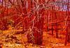 AUTUMN LEAVES   -   P1177371 (Felipe 1930) Tags: nature purenature afotando atouchofmagic mmmilikeit favoritecolorsandlights ~exclusivity~ ~justnature~ ilclubdiwallace myfavoriteworksofmyflickrfriends italy4u yello4u ~unique~ covertpaintersphotoshopartist 10shotstofam seasons4u