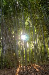 Huntington Bamboo Gardens (dingyisun) Tags: california sunlight water gardens botanical japanese nikon huntington exhibition bamboo 24mm nikkor hdr f14g d7000