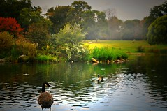 Pondlings (floralgal) Tags: park autumn fall birds landscape geese pond dusk ryenewyork colorfultrees autumnlandscape westchestercountynewyork