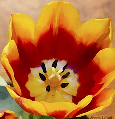 A Painted Tulip (Annette LeDuff) Tags: flower flora tulip favorited digitallyaltered southfieldmi saturnaward mimamorflowers flowersandclouds tmiyourartandnature ifyoulikepaintings floraaroundtheworld earthcreateswearetheusers art2012 photoannetteleduff annetteleduff leduffcameraart paintingwithmothernature 03082012 ourwonderfulandfragileworld madaboutflowers 11192012