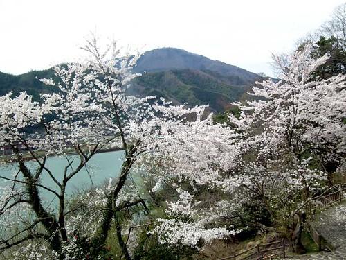 玄武公園から見る円山川