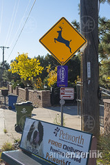 Traffic sign warning for wildlife crossing the street with a commercial for pet food on a bench in front of the sign (Arno Enzerink) Tags: street urban food pet sign warning bench crossing traffic wildlife deer domestic caution rockymountains copyspace cautious oxymoron