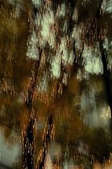 threesixsix - 315 - blend (DevilFishMark) Tags: blur project icm 2012 blend 366 d700 intentionalcameramovement project366 threesixsix