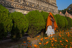 Poppies, Bodhgaya (Marji Lang Photography) Tags: travel flowers trees light people orange woman india color green heritage colors composition fleurs garden walking religious temple daylight site colorful peace shadows walk lumire couleurs buddha buddhist indian femme religion jardin peaceful sunny buddhism scene vert bouddha unesco holy poppies shawl lovely pilgrimage pilgrim bodhi bouddhisme bihar pelerin bodhgaya mahabodhi travelphotography bodhitree plerinage bouddhiste ef247028l indiansubcontinent orangepoppies matchingcolors mahabodhitemple buddhistpilgrimage canoneos5dmarkii travelanddocumentaryphotography marjilang mahabodhimahaviharatemple pelerinbouddhiste