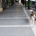 Dog in Thessaloniki