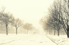 . whiteout . (susanonline (busy these days)) Tags: road street trees winter white snow storm boulevard snowstorm windy monochromatic row fade avenue blizzard curb whiteout blowingsnow snowcovered blustery obscuredvision susanonline