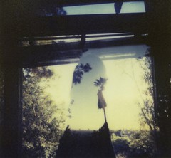 mid october (JStark 4) Tags: mamiyauniversal cb70 px70 impossibleproject