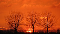 BEDUM, THE NETHERLANDS (pwitterholt) Tags: trees sunset tree zonsondergang bedum noordwolde proef10