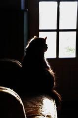 Mucki (Tinina67) Tags: family france silhouette cat chair au walker tina katze marron mookie odc wingback mucki ohrensessel ourdailychallenge tinina67