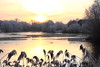 Lodge Lake Frost (Trev Earl) Tags: winter lake canon buckinghamshire freezing keynes hawfrost 50d yahoo:yourpictures=yourbestphotoof2012 lodgelakegreat holmemilton yahoo:yourpictures=winterv2 ilobsterit