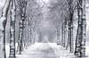 Mysterious person ... Explore (Alex Verweij) Tags: trees winter snow cold tree canon bomen forrest path sneeuw pad boom dec lane 7d mysterious 2012 almere koud wandelaar mysterieus almerestad mysterieuze filmwijk alexverweij eenling 7dec2012