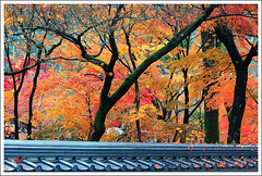 20121126_6810a_ (Redhat/) Tags: autumn fall japan temple maple kyoto redhat           eikando