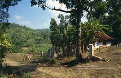 Pacitan, Farm (blauepics) Tags: indonesien indonesia indonesian indonesischer landscape landschaft central zentraljava java water wasser pacitan hill hgel farm bauernhof agriculture landwirtschaft house haus hof rural lndlich 1991