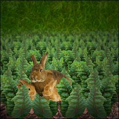 Days of plenty (jaci XIII) Tags: horta verdura folhagem animal coelho vegetal arden vegetables foliage pet plant rabbi