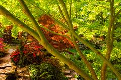 summer at exbury gardens (Anthony White) Tags: exbury gardens uk gb summer red green bench