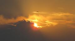 IMG_0025x (gzammarchi) Tags: italia paesaggio natura mare ravenna lidodidante alba sole nuvola animale uccello gabbiano volo monocrome
