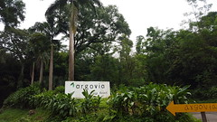 20160720_104418 (Mayan_princess) Tags: chiapas argovia finca resort caf coffee kaffee paraso paradise vegetacin vegetation verde green ro river spa relajacin relax forest selva orgnico autosostenible