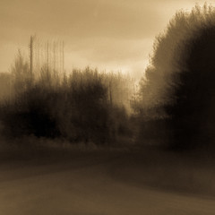 Yearning XXIX (William Flowers) Tags: memories dreams trees road melancholia