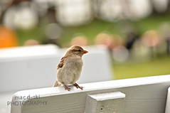 Hello there #bird #bokeh #green #bench #nature (mac d-ski photography) Tags: bokeh bench green nature nikond90 photography