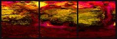 20160816 WoutvanMullem Drieluik Hout Etalage 3-2 (Wout van Mullem) Tags: kunst de etalage zuidhorn wout van mullem kleurrijk boomschors roest rust drieluik tryptich triptiek