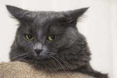 Not impressed (Carbon Arc) Tags: cat kitty feline furball face eyes nose mouth whiskers ears pet