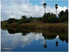 Nubes,palmeras y reflejos---(Clouds, palm trees and reflections) (# RAMN Mortadelo #) Tags: mortadelo65pp barcelona palmeras reflejo rio martesdenubes felizmartesdenubes happytuesdayclouds